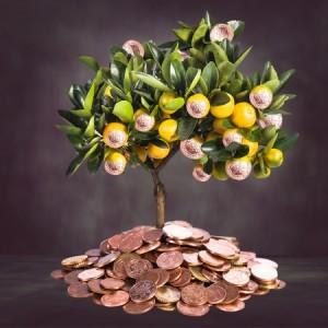dental marketing money growing on trees
